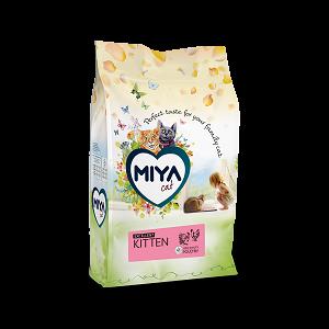 Miya kitten excellent